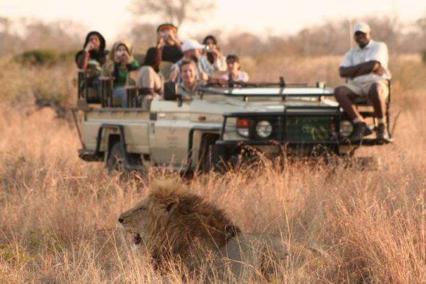 tintswalo_safari_lodge_-_lion_0